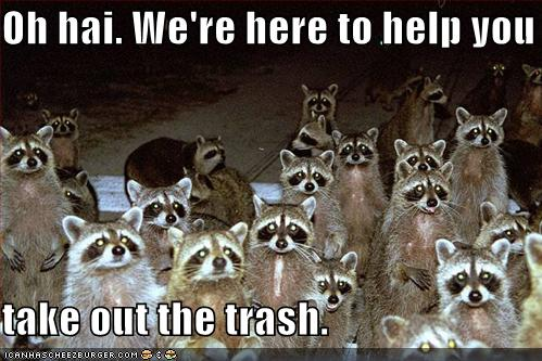 funny-pictures-raccoons-are-here-to-help-you